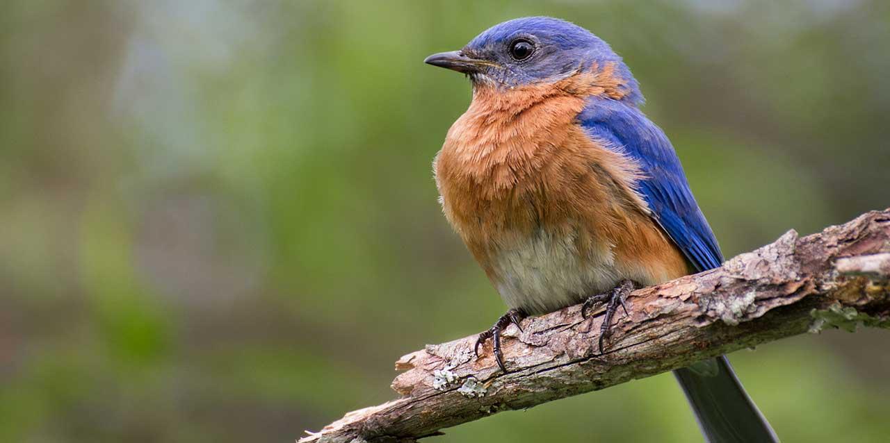 Birding in Vernon Parish - Louisiana's Legend Country